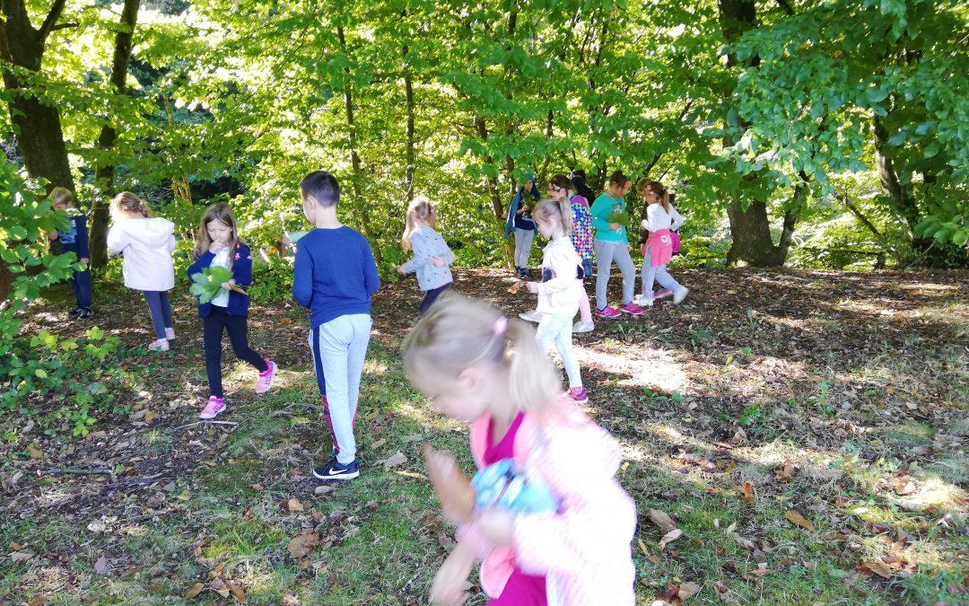 Gozdoljub v 2. razredu